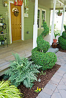 Small front porch garden with Japanese painted fern, swirl topiary evergreen boxwood shrub, Hakonechloa ornamental grass, hanging, plants, stone walkway, front door of house, hanging plants, ornaments, tidy mulch