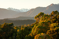 Sunrise over native coastal forest with Southern Alps and Butler Ranges, Westland Tai Poutini National Park, UNESCO World Heritage Area, South Westland, New Zealand, NZ