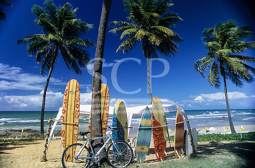 Costa do Sauipe, Brazil. Malibu surf boards and a bicycle propped up next to palm trees at the beach.