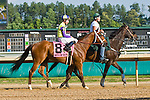 20 June 2009: Battle of Hastings (GB) ridden by Tyler Baze going to the start before winning the Colonial Turf Cup (Gr II) stakes race. Battle of Hastings is owned by M. House and trained by J. Mullins.