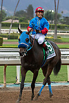 """ARCADIA, CA  SEPTEMBER 28:  <br /> #5 Mongolian Groom, ridden by Abel Cedillo, returns to the connections after winning the Awesome Again Stakes (Grade l) """"Win and You're Breeders' Cup Classic Division"""" on September 28, 2019 at Santa Anita Park in Arcadia, CA.(Photo by Casey Phillips/Eclipse Sportswire/CSM)"""