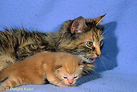 SH31-004z  Cat - mother and 16 day old kitten