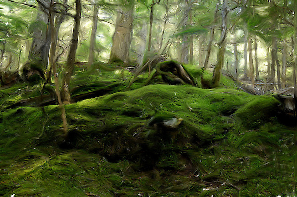 Mythic Forest and Memories of Middle Earth