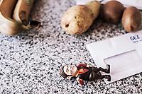 Kuechenarbeitsflaeche mit Spielfigur, frischem Obst, Umschlag einer GEZ-Mahnung, Hartz IV, Bochum<br /> <br /> <br /> *** HighRes auf Anfrage *** Voe nur nach Ruecksprache mit dem Fotografen *** Sonderhonorar ***<br /> <br /> Engl.: Europe, Germany, Bochum, unemployment benefit, Hartz IV, unemployed, unemployment, poverty, poor, social benefits, kitchen, toy, fruits, reminder, 28 March 2012<br /> <br /> ***Highres on request***publication only after consultation with the photographer***special fee***