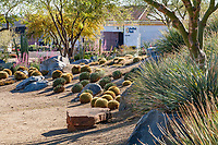 Golden barrel cactus, agave, Sotol and trees on berm by gravel swale with stone slab bench in resilient drought tolerant garden in strong clear morning light at Palm Springs Art Museum in Palm Desert, California