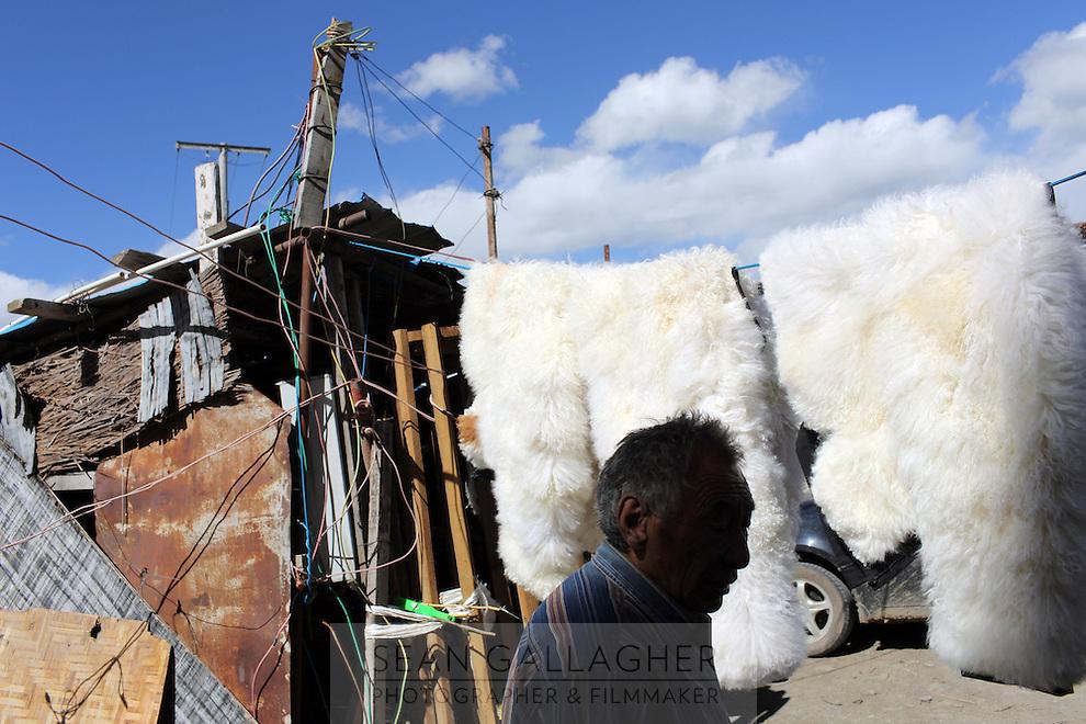 A Tibetan man walks past sheep furs hung in the sun on the Tibetan Plateau, in western China.