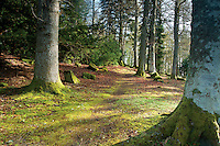 Woodland path at Crathes Castle, Banchory, Aberdeenshire
