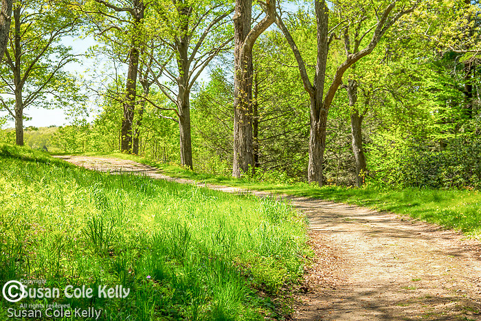 Walking paths at Maudslay State Park in Newburyport, Massachusetts, USA