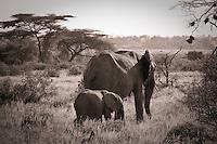 Elephant mother and calf in Samburu National Park, Kenya