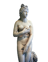 2nd century AD Roman marble sculpture of Aphrodite (Venus), 'Dresden Capitoline Type, copied from a Hellanistic Greek original,  inv 6238, Museum of Archaeology, Italy, white background