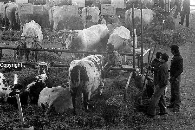 Parc des Expositions (île du Ramier). 4 avril 1978. Vue en plongée sur les stands de bovins ; à droite trois jeunes garçons, l'un d'eux tient une fourche . Cliché pris lors de l'inauguration du 44ème Concours régional agricole.