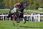Paddy Young aboard Farndale  Wins The K2M INC. Steeplechase  at  Morven Park in Leesburg, VA  on 10/08/11. Trained by Thomas Voss (Ryan Lasek / Eclipse Sportwire)