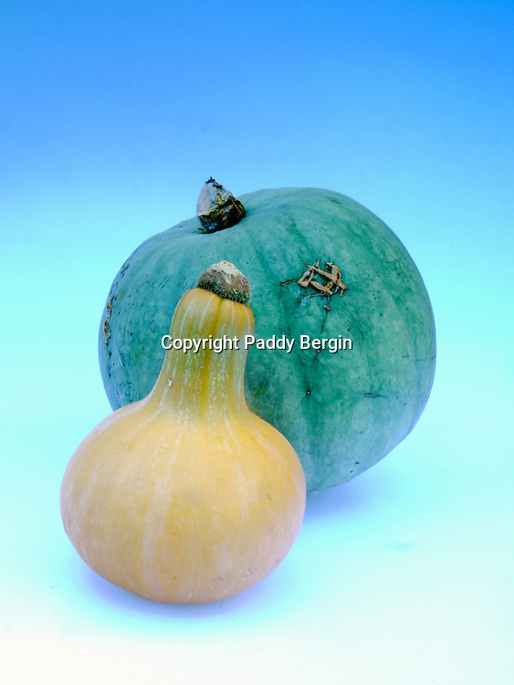 Cucurbita (Latin for gourd) is a genus in the gourd family Cucurbitaceae native to and first cultivated in the Andes and Mesoamerica.<br /> <br /> The plants, referred to as squash, pumpkin or gourd depending on species, variety, and local parlance, are grown for their edible fruits and seeds.<br /> <br /> Stock Photo by Paddy Bergin