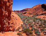 Valley of Fire State Park, NV:  Spring green of the desert floor under red Navajo Sandstone formations