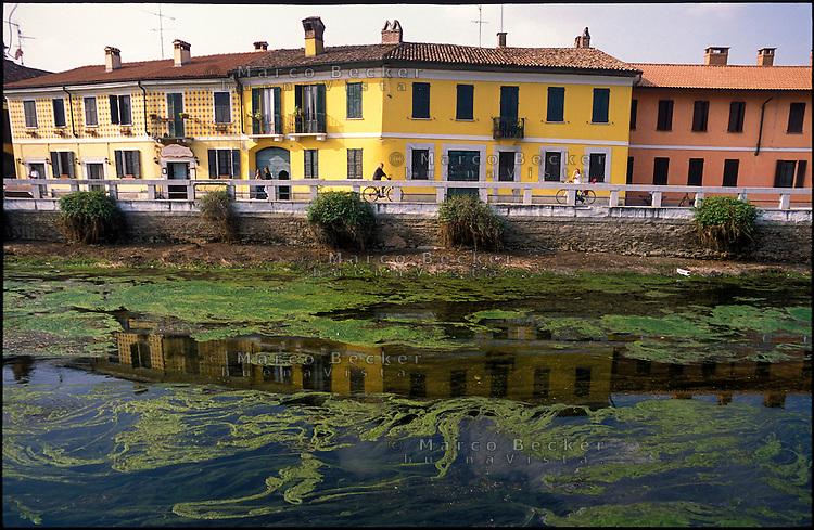 Gaggiano, paese a ovest di Milano. Alghe nell'acqua stagnante del  Naviglio Grande messo in secca --- Gaggiano, small village west of Milan.  Algae in the shallow water of the canal Naviglio grande