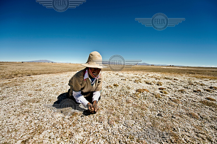 Samuel Mamani Chino crouches on a patch of salty earth, where his poncho and hat will blend, camouflaging him. Here he will wait for a flock of flamingos to pass and then try to bring one down with his sconi throwing stones.
