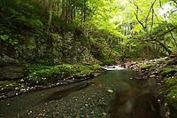 Green forest, Yokokawa River