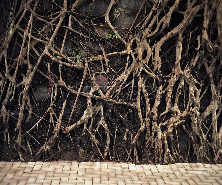 The Back door, Wurzeln eines Bantambaums, Hongkong, China, <br /> Asien, Pflanze, Wurzelgeflecht, Geflecht, Wand, Bantam, Baum<br /> <br /> English: Hong Kong, the back door. the roots of a banyan tree grow over the asphalt and walls in the middle of the city, Hong Kong Flora.<br /> HKFDBD page 50-51<br />  ***Keine Social_Media Nutzung***