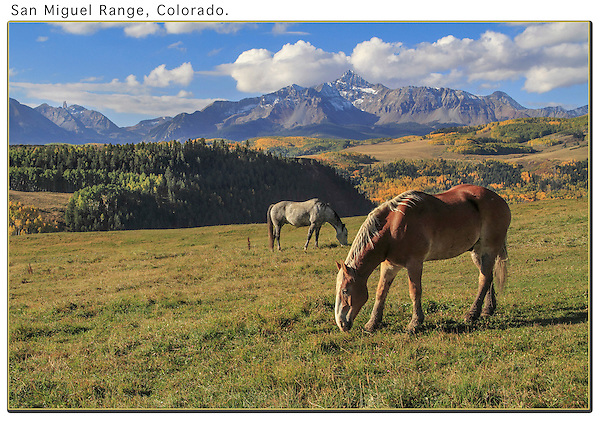 Horses grazing above Telluride.<br /> John offers guided, photo tours of Colorado's mountains.  Year-round tours.