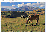Horses grazing above Telluride.<br />