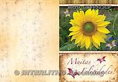 Alfredo, FLOWERS, paintings, BRTOCH40513CP,#F# Blumen, flores, illustrations, pinturas