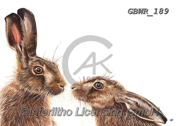 Simon, REALISTIC ANIMALS, REALISTISCHE TIERE, ANIMALES REALISTICOS, innovative, paintings+++++OliviaDeRivaz_KissingHares,GBWR189,#a#, EVERYDAY