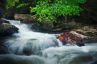 Spring along the Cullasaja River, Cullasaja Gorge