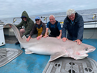 BNPS.co.uk (01202 558833)<br /> Pic: Kevin McKie/BNPS<br /> <br /> Pictured: Brian Harrison, Rob Lynn, Tommy Dunford and Roy Parfitt with a 414 pound catch.<br /> <br /> A British fishing party has caught a record number of a rarely seen species of shark that pre-date dinosaurs.<br /> <br /> The group reeled in 14 monster sixgill sharks in one day in a secret area of the north Atlantic dubbed Jurassic Park because it is inhabited by the pre-historic fish.<br /> <br /> The sharks weighed up to 450lbs (32st) each and it took an average of 40 minutes to reel in each one.<br /> <br /> The sixgill shark - Hexanchus griseus in Latin - spends much of its time in deep water and as a result has little interaction with humans, with only one reported attack in 500 years.