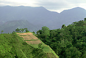 DOMINICAN REPUBLIC<br /> Steeply sloping field in San Cristobal province