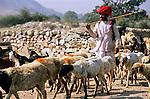India, Rajasthan, near Udaipur: Rural scene of shepherd and goats on way to market | Indien, Rajasthan, bei Udaipur: Hirte mit Ziegenherde auf dem Weg zum Markt