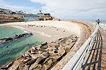 People watch harbor seals laying on the children's pool beach from the seawall in La Jolla, California