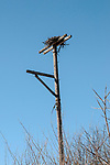 Osprey nest stand inside the Great Bay National Wildlife Refuge in New Hampshire, vertical.