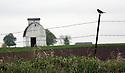 barn with bird on fence in Iowa