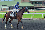 U S Marshal(2) with Jockey David Moran aboard after completing the Summer Stakes at Woodbine Race Course in Toronto, Canada on September 13, 2014 with Jockey Patrick Husbands aboard.