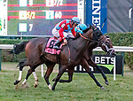 Harmonize (no. 8) wins the Grade 3 Glens Falls Stakes, in the gloaming, Sep. 2 at Saratoga Race Course, Saratoga Springs, NY.  The winner, ridden by John Velazquez and trained by William Mott won by a neck  in the  1 3/8 mile race on the turf against eight opponents.  (Bruce Dudek/Eclipse Sportswire)