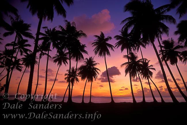Sunset and palm trees, Chuuk (Truk) Lagoon, Micronesia.