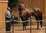 Hip #427 Royal Delta, winner of the 2011 Breeders Cup Ladies Classic sells to Besilu stables for $8,500,000.   Bidding started at $2,000,000.  November 8, 2011.