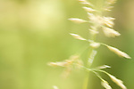 A blade of grass runs in the wind at the C&O Canal section of Great Falls, Maryland.  The abstract quality of the image results from a wide aperture and slow shutter speed.