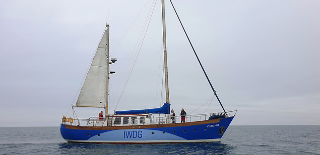 Celtic Mist in her new look
