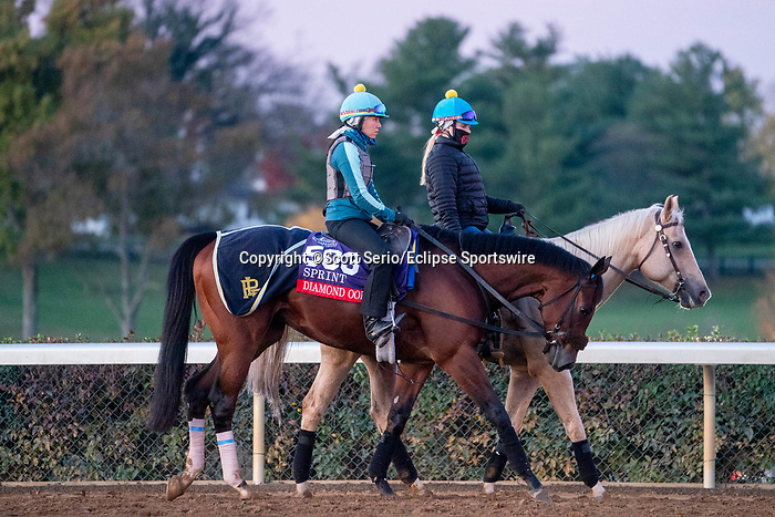 November 5, 2020: Diamond Oops, trained by trainer Patrick L. Biancone, walks on the track during morning workouts at Keeneland Racetrack in Lexington, Kentucky on November 5, 2020. Scott Serio/Eclipse Sportswire/Breeders Cup/CSM