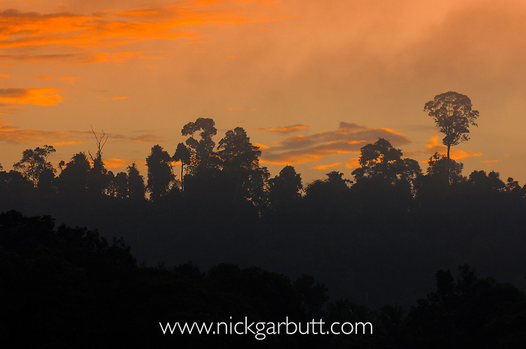 Sunrise over riverine rainforest. Kinabatangan River, Sabah, Borneo.