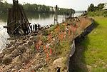 River side stabilization and rehabilitation, South Waterfront, Oregon