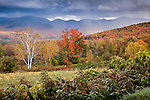 Fall foliage, Sugar Hill, White Mountains, NH