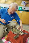 Bob Prescott Measuring Olive Ridley Sea Turtle, Sanctuary Director, Welfleet Bay Wildlife Sanctuary, Audubon