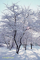 1I02-025a  Snow on trees