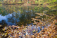 Wetlands pond in fall color in Shades State Park; Parke County, IN