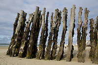 Wooden stakes driven into the sand on the beach at Saint-Malo, Brittany, France.