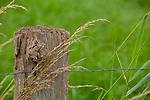 Europa, DEU, Deutschland, Nordrhein-Westfalen, Niederrhein, Nettetal, Naturpark Schwalm-Nette, Weidenzaun mit Graesern, Natur, Umwelt, Landschaft, Landschaftsfotos, Landschaftsfotografie, Landschaftsfoto, <br /> <br /> [Fuer die Nutzung gelten die jeweils gueltigen Allgemeinen Liefer-und Geschaeftsbedingungen. Nutzung nur gegen Verwendungsmeldung und Nachweis. Download der AGB unter http://www.image-box.com oder werden auf Anfrage zugesendet. Freigabe ist vorher erforderlich. Jede Nutzung des Fotos ist honorarpflichtig gemaess derzeit gueltiger MFM Liste - Kontakt, Uwe Schmid-Fotografie, Duisburg, Tel. (+49).2065.677997, ..archiv@image-box.com, www.image-box.com]