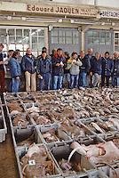 Europe/France/Bretagne/29/Finistère/Concarneau: La criée - Mareyeur en rang davant les caisses de poissons