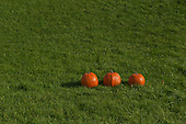 Schenectady, NY. 3 pumpkins in a row outside on the grass. Photos also available of 0, 1, 2, 4, and 5 pumpkins in the same position so can be used for math counting specs. ID: AK-ICP. © Ellen B. Senisi